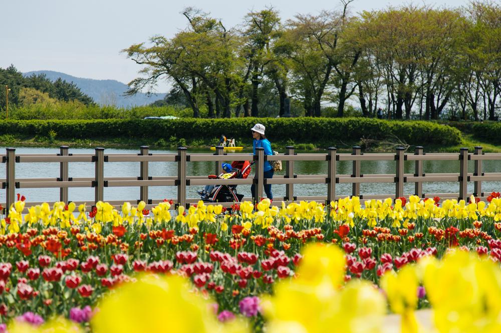 Namhae (남해)Road Trip Series: Field of Tulips,South Korea.