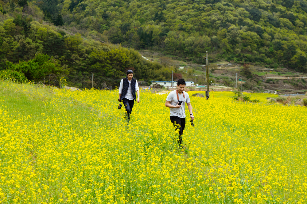 Namhae (남해) Road Trip Series: Canola Field (유채꽃) at Dumo Village (두모마을), South Korea.