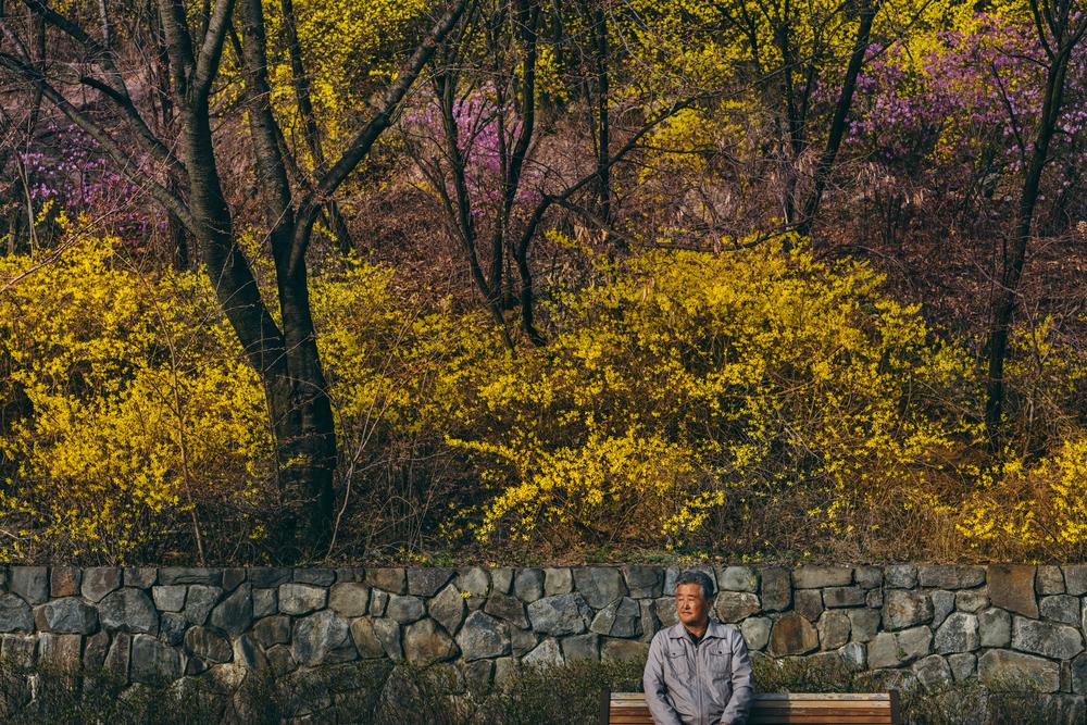 Spring in Seoul: Seoul Dream Forest (북서울꿈의숲), Seoul (서울), South Korea.