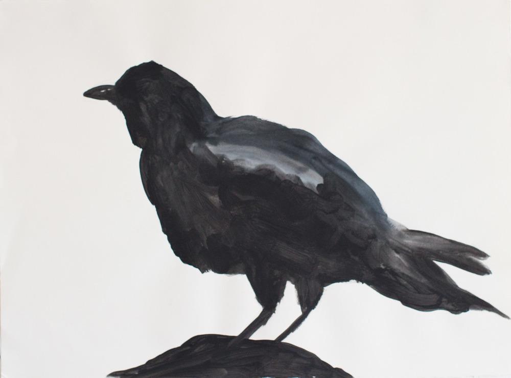 "Crow 1_30""x22"""