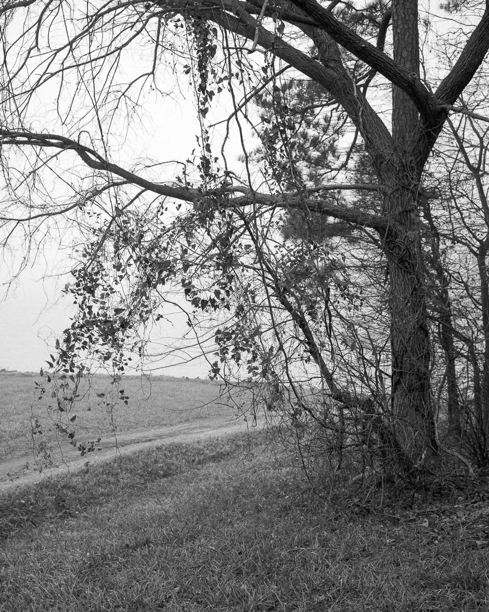 crabtree-03.jpg
