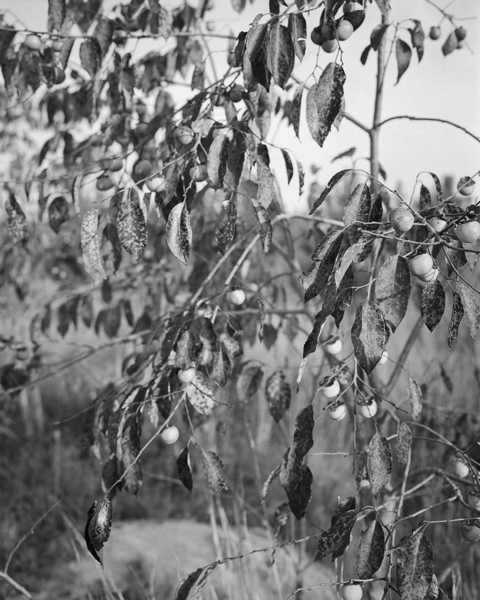 apples-04.jpg