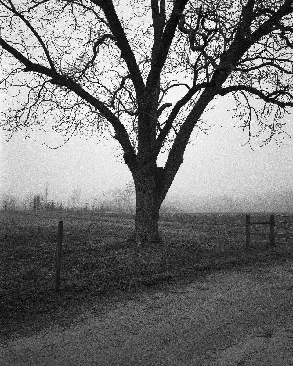 fog-08-2.jpg
