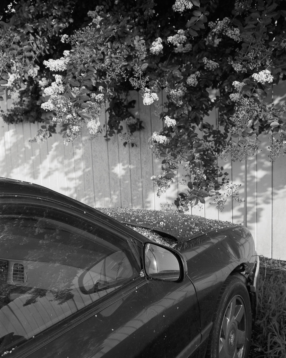 springhope-06.jpg