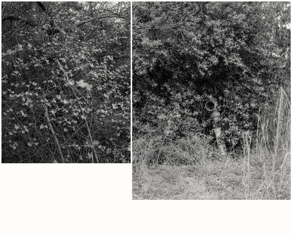 leaves-and-pipe-lg.jpg
