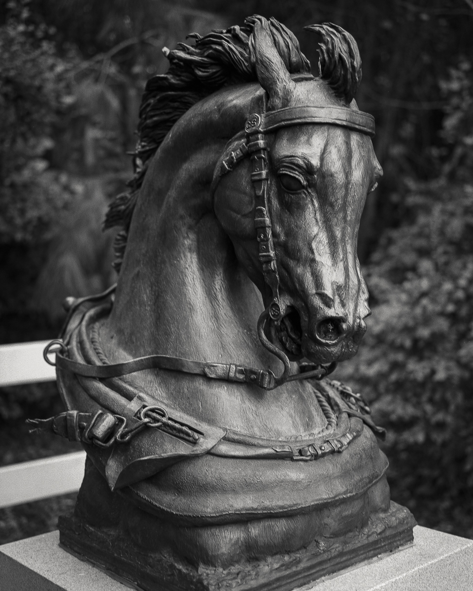 horse-26.jpg
