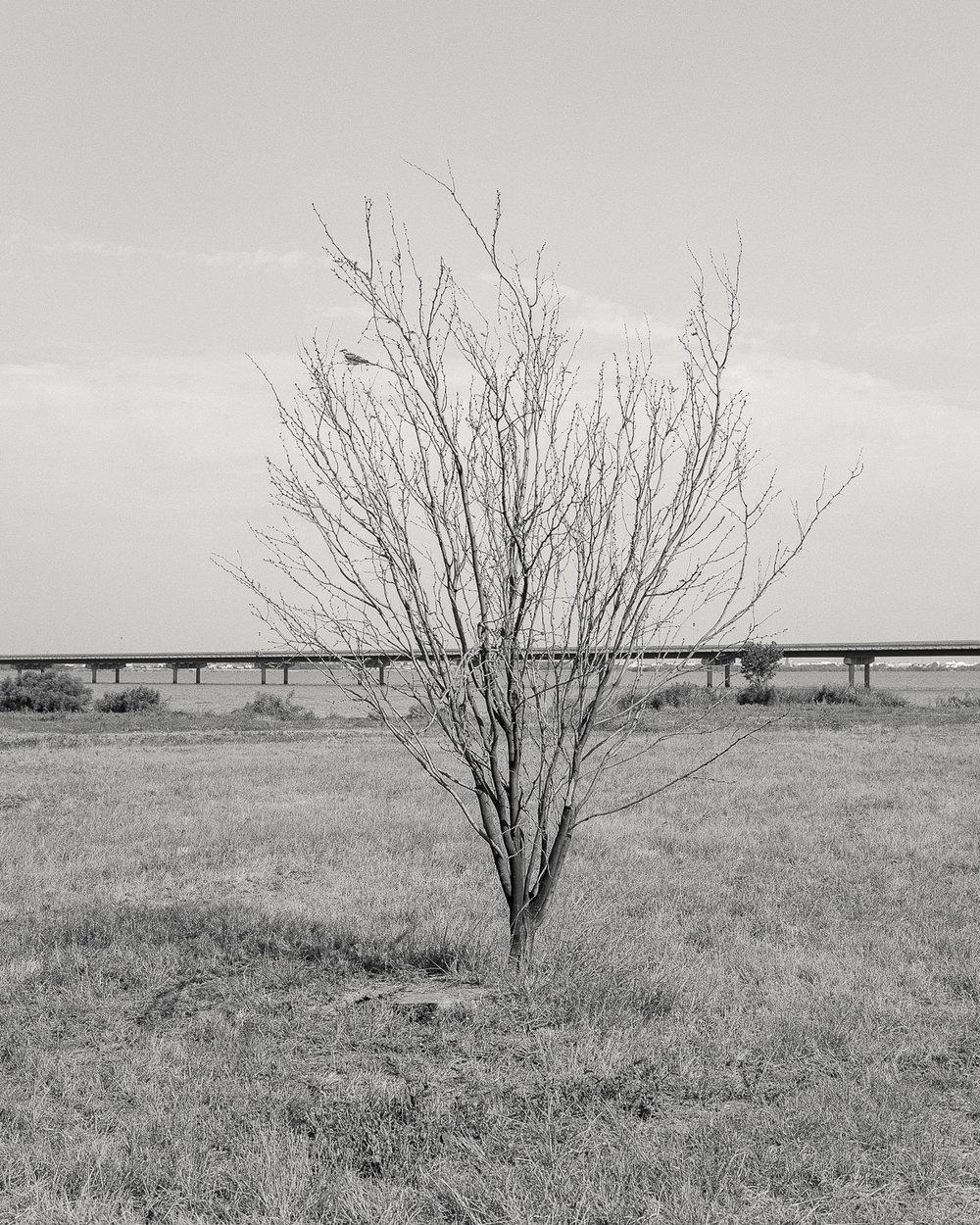 texas-2400-6.jpg