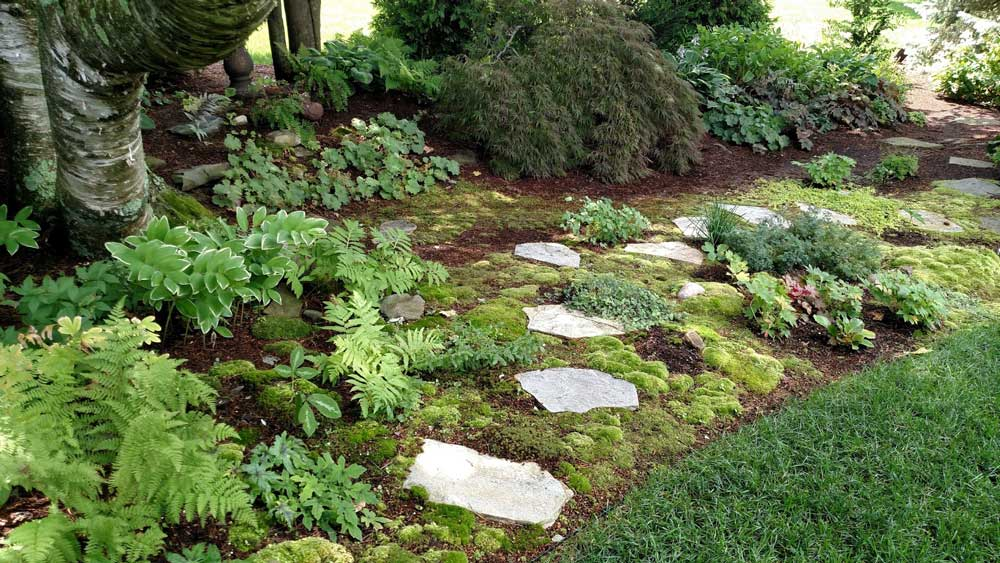 Moss and stepping stones