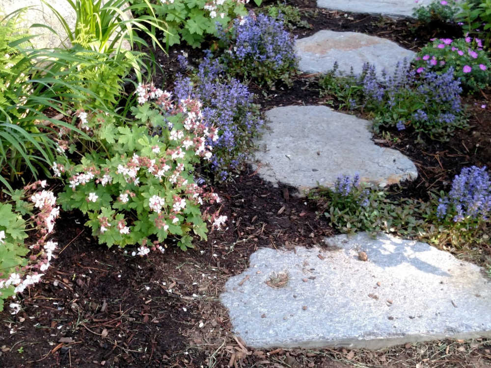 plants to complement a stepping stone path