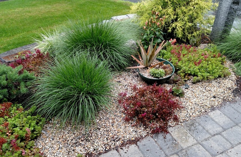 Small pea gravel is a nice complement to water-wise grasses and sedum.