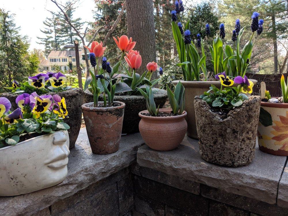 Late April color pots