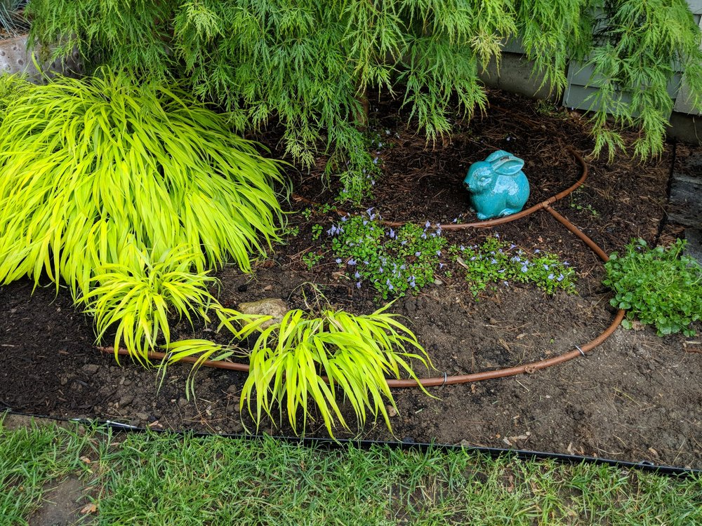 New drip irrigation tubing installed and awaiting a light overlay of Nutri-Mulch