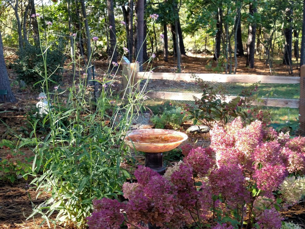 Lovely Fall color abounds in this young garden.