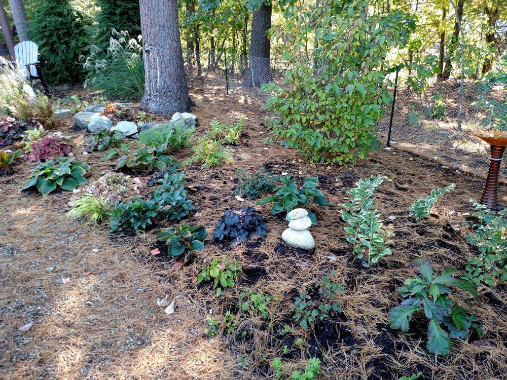 Plants are settling in and the fallen pine needles will remain in place as a natural mulch and cover for winter.