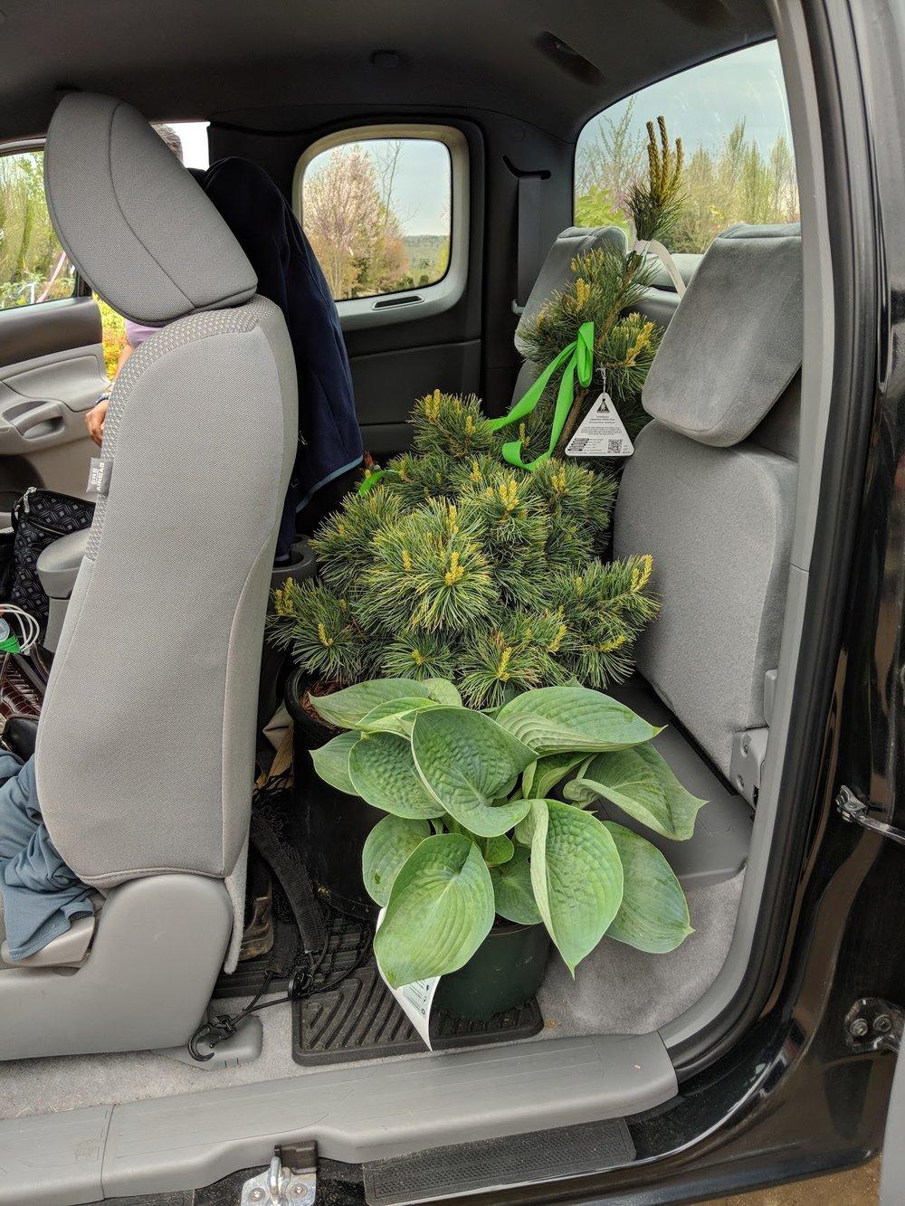 Back-seat stowaways