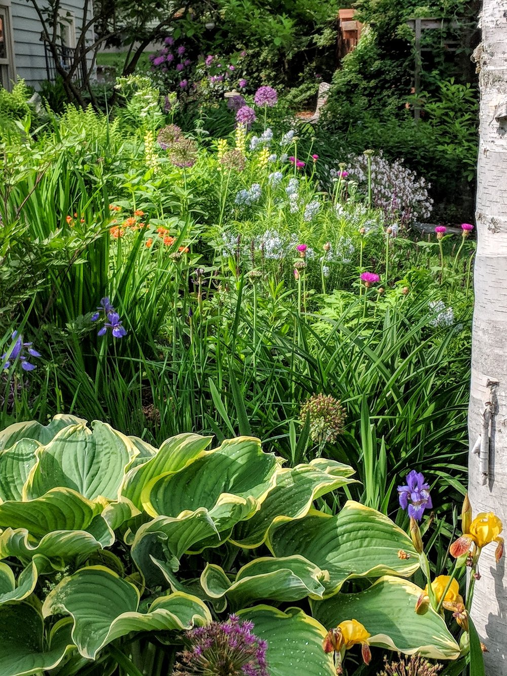 2018-06-02-allium-west-mixed-border.jpg