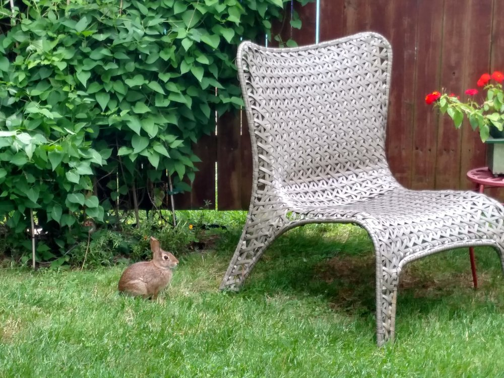 2017-08-08-bunny-chair.jpg