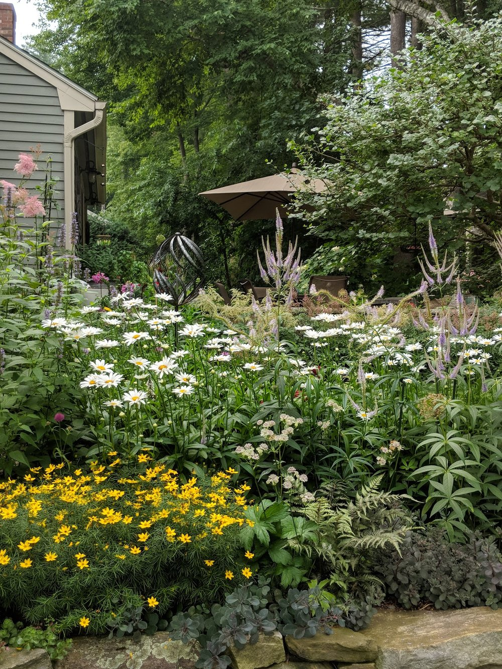 July 16: Veronicastrum 'Fascination' candelabras add height and drama among the Shasta daisies