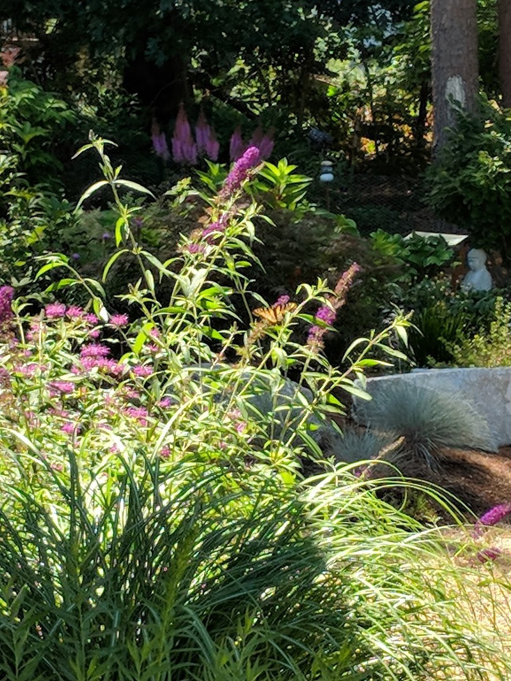 "Purple Butterfly bush struts spiked trusses that ""talk"" to the giant astilbe's purple candelabras in deep shade."