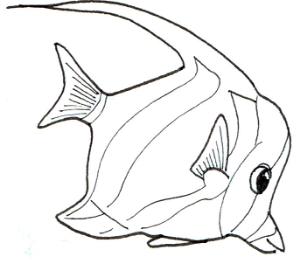 FishLines.jpg