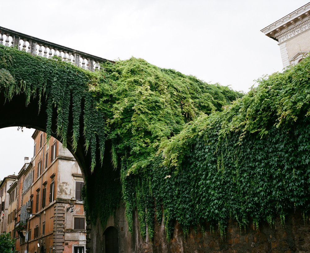 Bridge Covered In Vines, Rome, Italy
