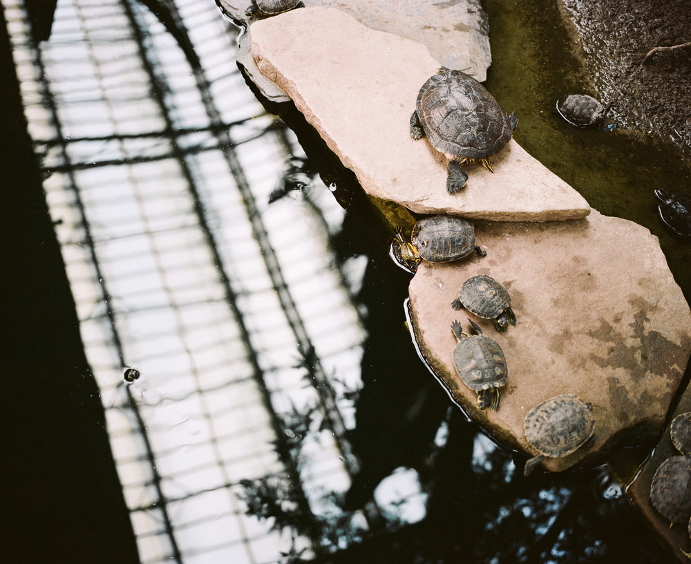 Turtles on rocks in a pond with the reflection of a roof above in the train station in Madrid Spain