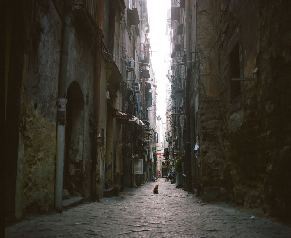 Cat in the narrow streets of Naples, Italy