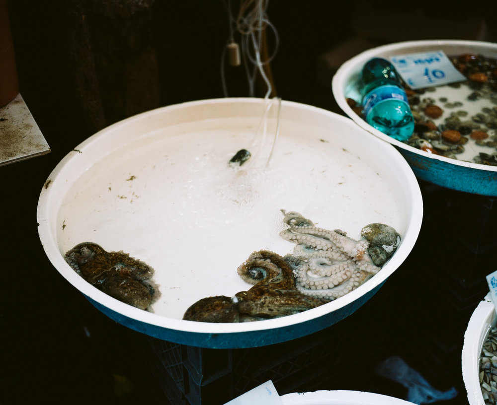 Octopi in round white tub in a Market in Naples, Italy