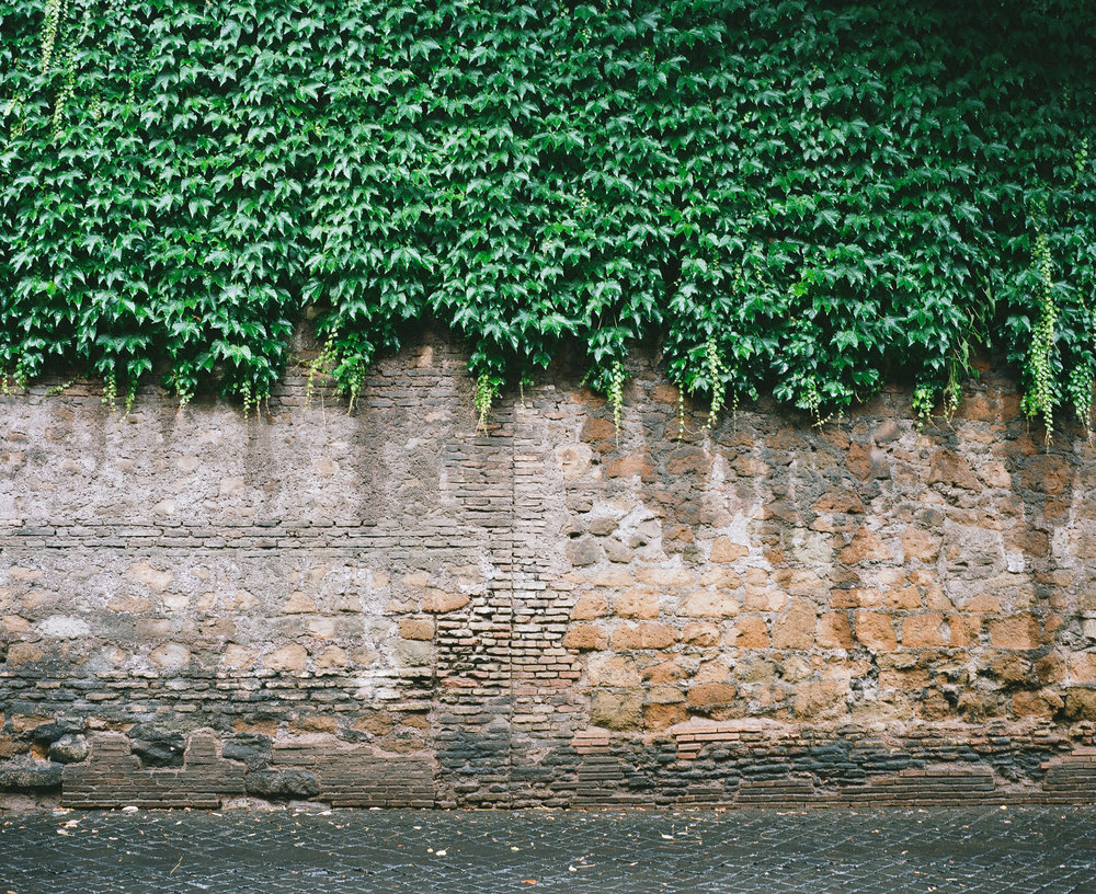 Ivy covered wall in Rome, Italy