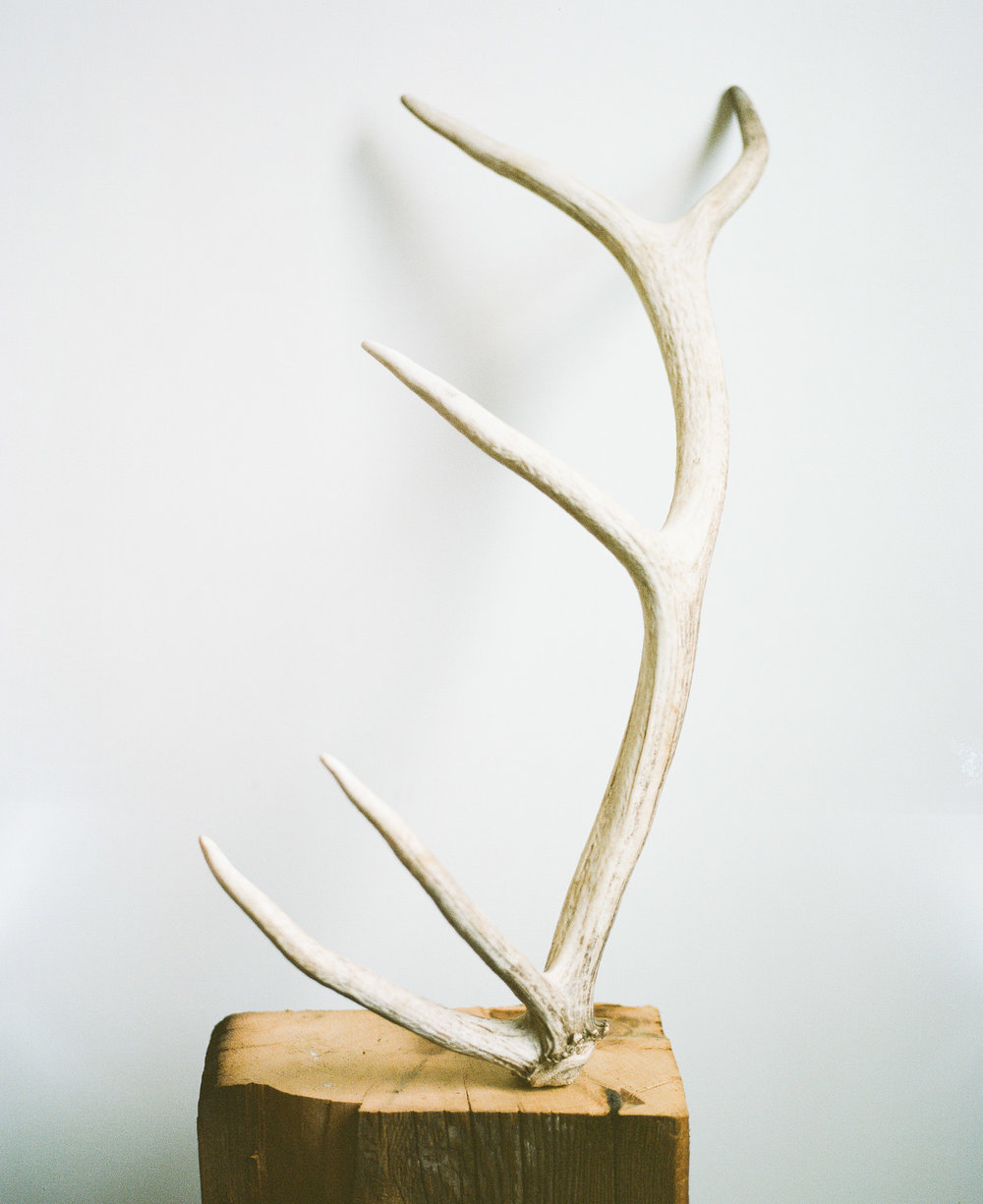 Elk Antler on a block of wood