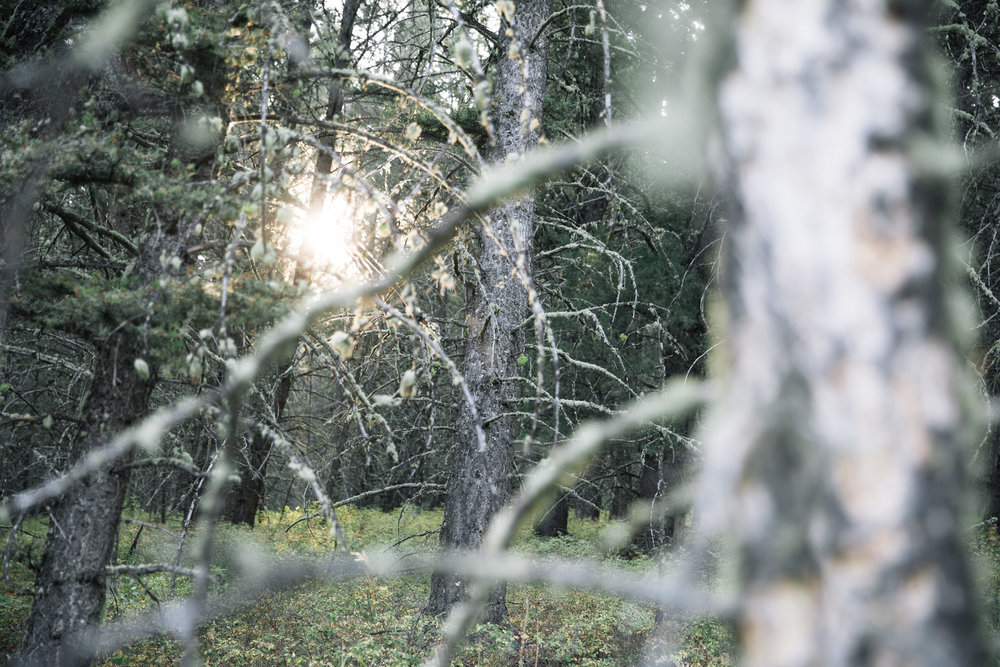 Sunglare through deep forrest trees