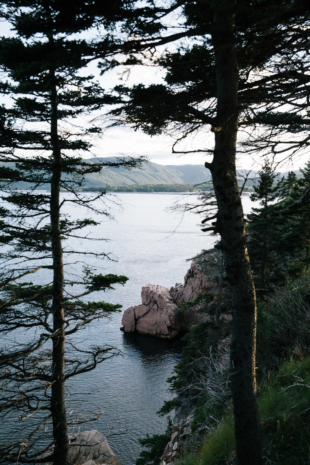 Rock outcrop into the ocean seen between trees- travel photography cape breton nova scotia