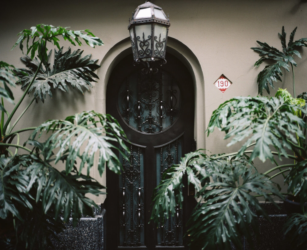 Doorway surrounded by large plants in Mexico City