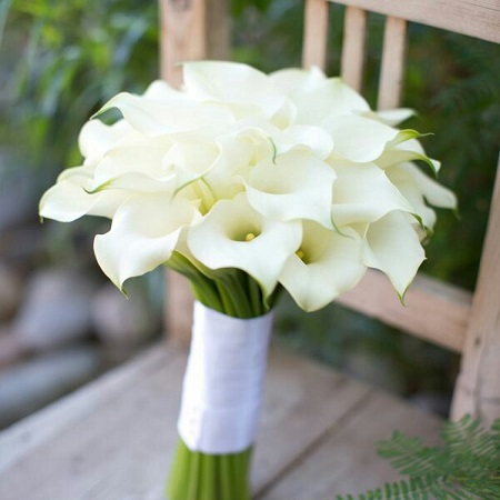 With its elegant trumpet shape, the CALLA LILY more than stands for its meaning of 'regal'.