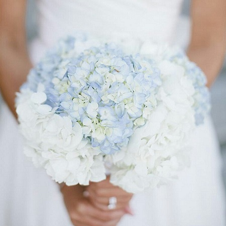 The round blooms of tightly packed petals in the HYDRANGEA signify 'perseverance' and 'heartfelt emotion'.