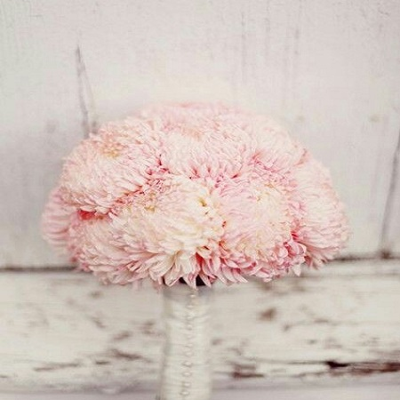 Not generally a common choice for bridal bouquets but hugely versatile, the CHRYSANTHEMUM symbolizes 'joy'.