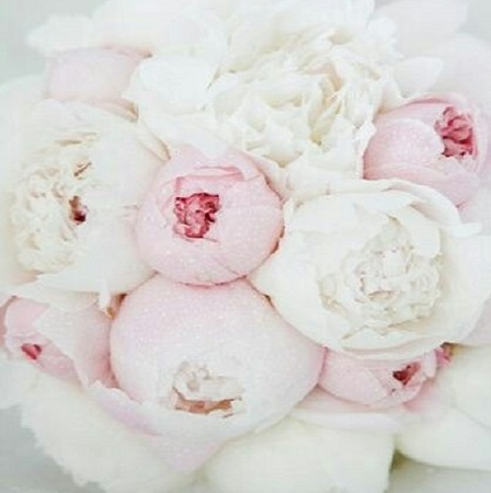 Brides may love PEONIES for their luscious looks, but will cherish their meaning of a 'happy marriage'!