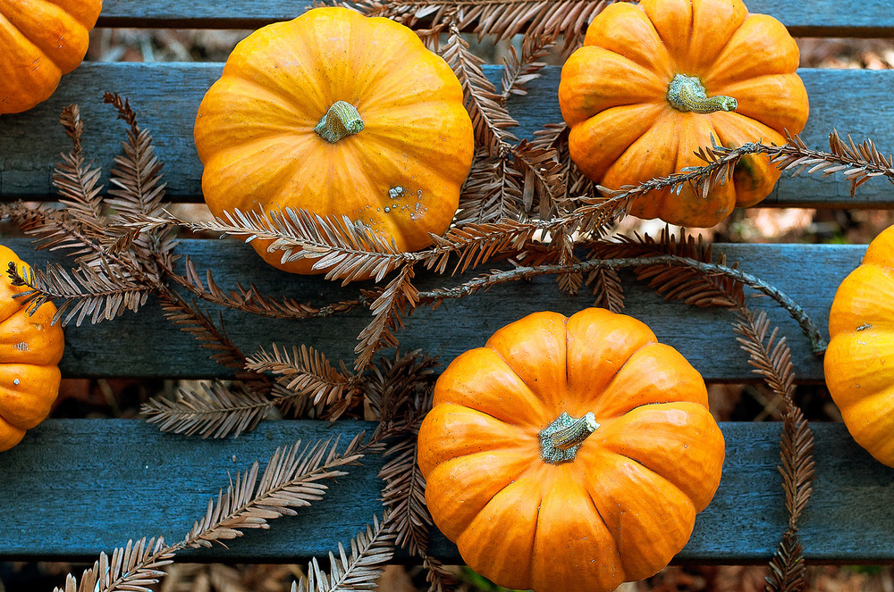pumpkins-5.jpg