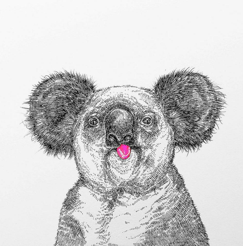 NikiPilkington_Koala.jpg