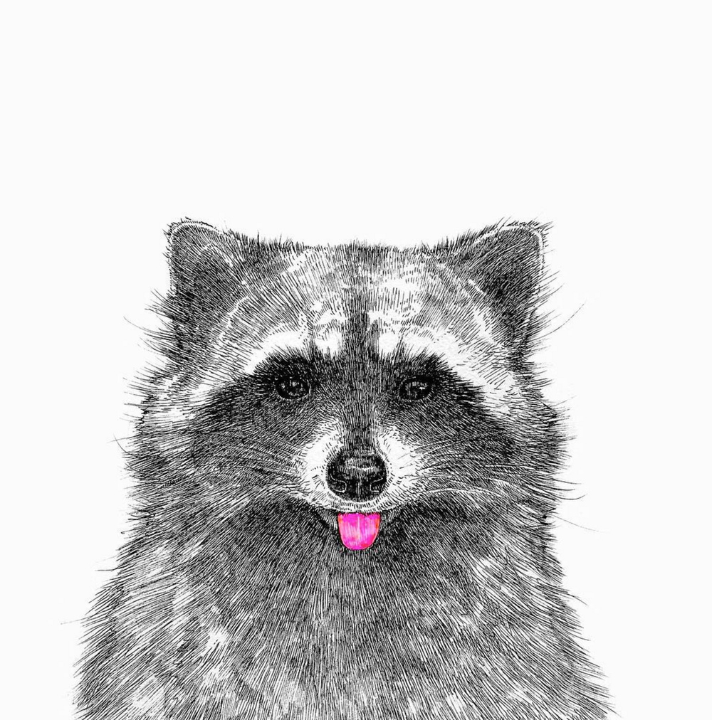 NikiPilkington_Raccoon.jpg
