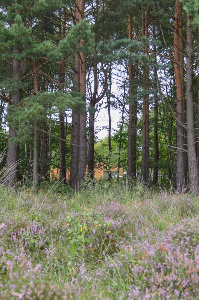 heathland-larch-house