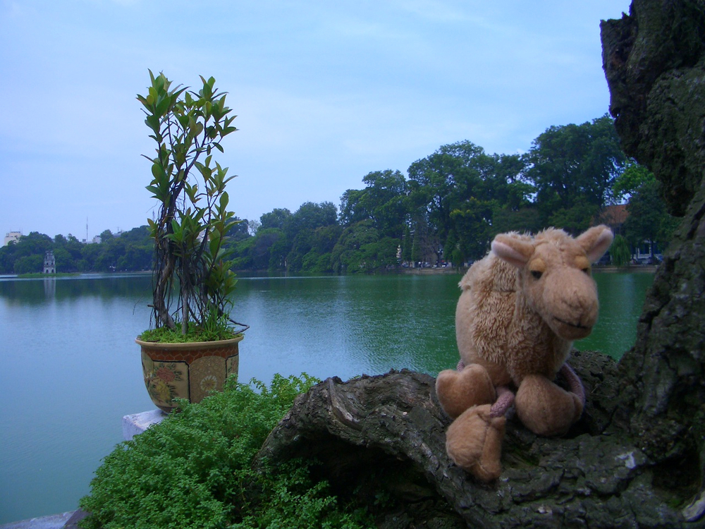 Furry Bob chilling on Hoan Kiem Lake