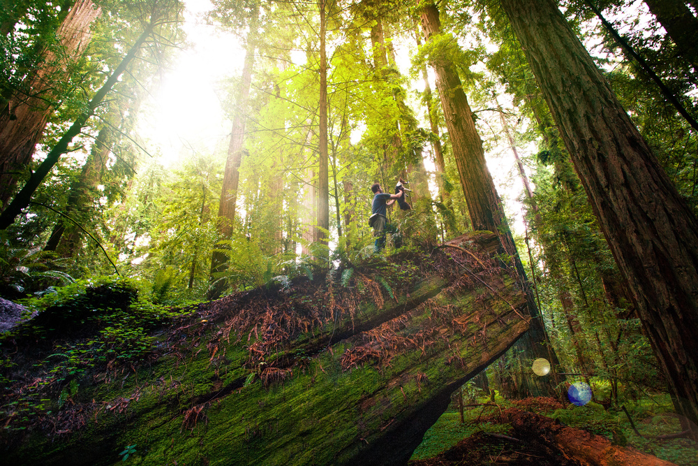Circle of Life in Humboldt Redwoods State Park, California