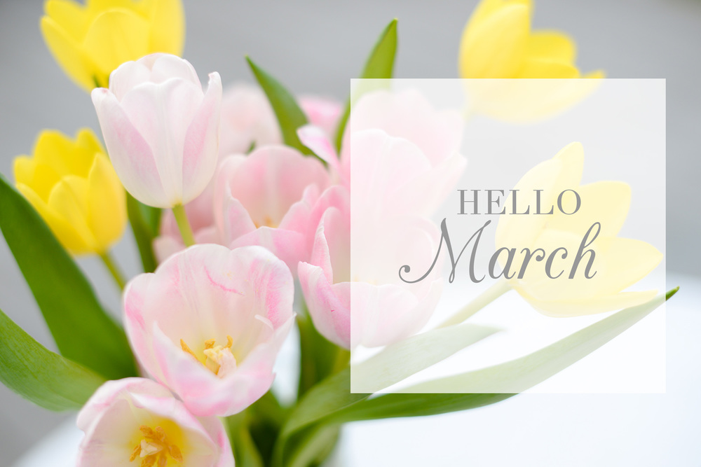 hello-march-new-beginnings-north-carolina-wedding-photographer