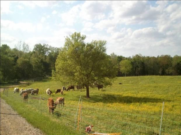 "News – Tagged ""2011-9"" – Little Seed Farm"