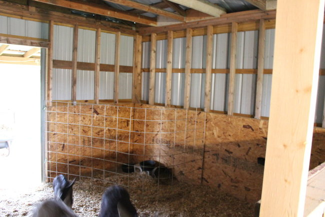 The Temporary Goat House Solution Little Seed Farm