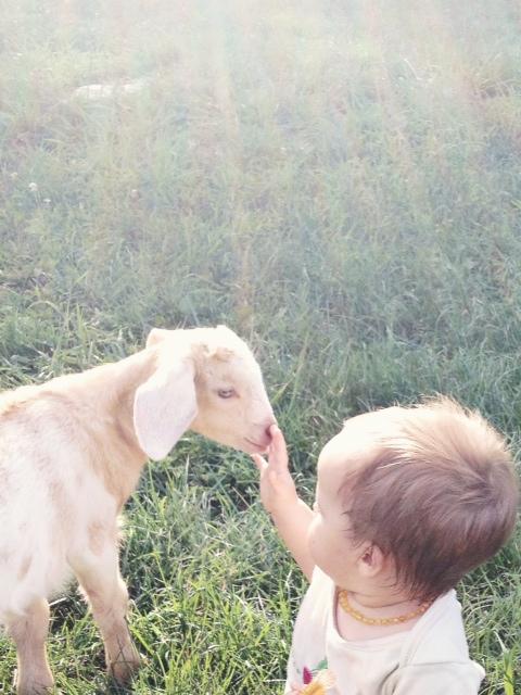 george-baby-goat.jpg