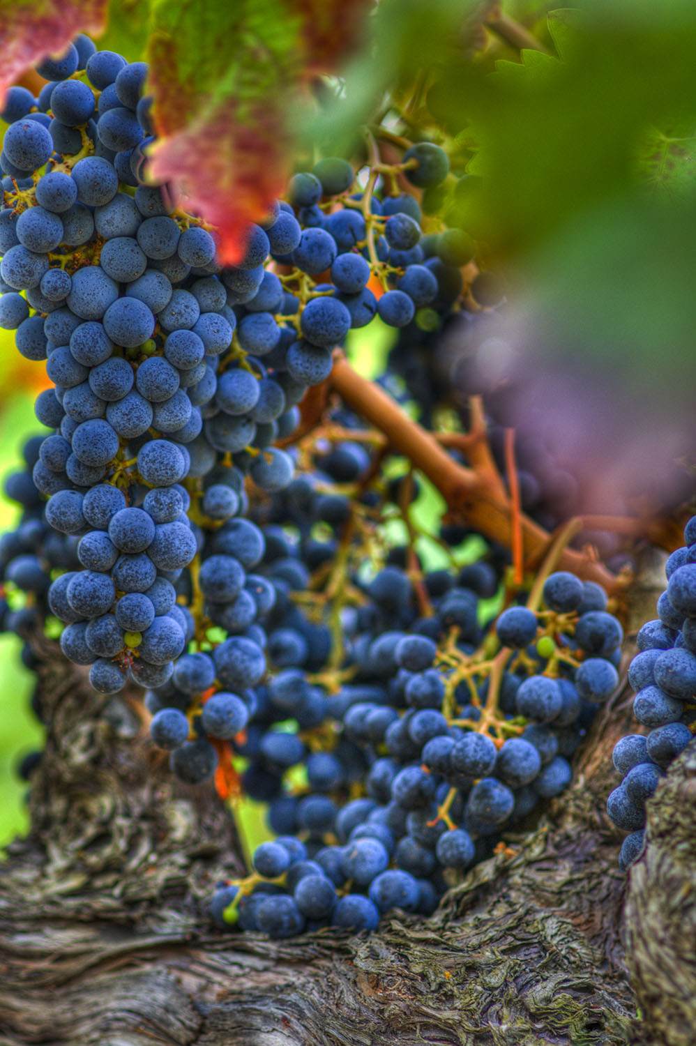 San Francisco Commercial & Industrial Photography-Napa harvest season