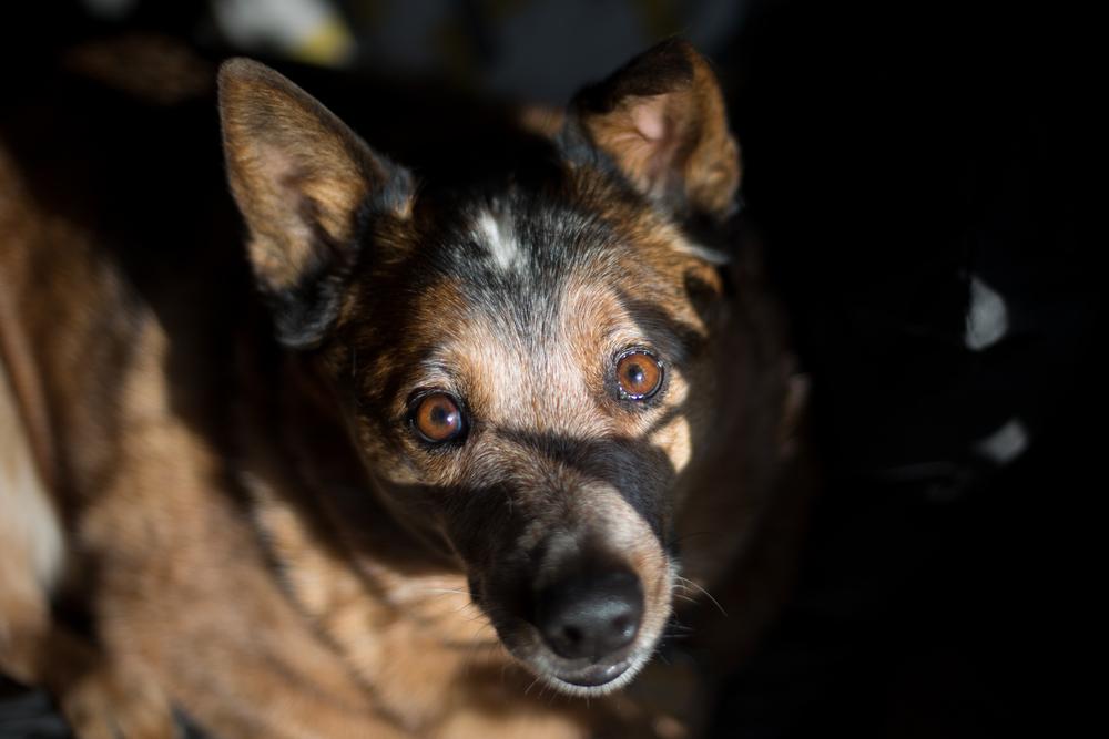 31 // 365 Shadow Puppy