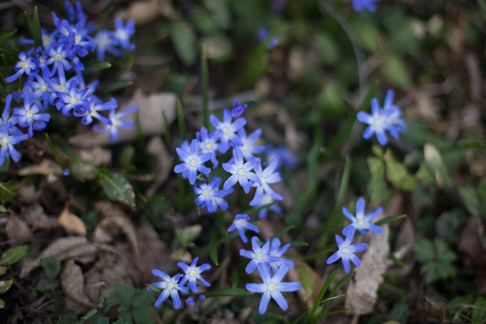 103 // 365 Gratuitous flower photo